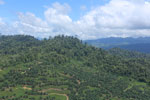 Conversion of rainforest for palm oil production in Borneo -- sabah_aerial_0593