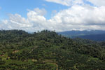 Conversion of rainforest for palm oil production in Borneo -- sabah_aerial_0594