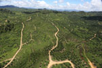 Oil palm plantation in Borneo -- sabah_aerial_0599