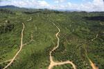 Oil palm plantation in Borneo -- sabah_aerial_0599