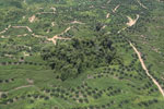 Oil palm plantation in Borneo -- sabah_aerial_0600