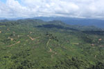 Oil palm plantation in Borneo -- sabah_aerial_0603