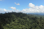 Heavily logged forest in Borneo -- sabah_aerial_0611