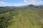 Forest and oil palm plantations in Borneo -- sabah_aerial_0619