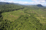 Forest and oil palm plantations in Borneo -- sabah_aerial_0620