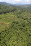 Forest and oil palm plantations in Borneo -- sabah_aerial_0621