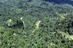 Heavily logged forest in Borneo -- sabah_aerial_0630