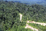 Heavily logged forest in Borneo -- sabah_aerial_0635