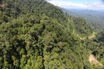 Logging road in Borneo -- sabah_aerial_0647