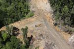 Industrial logging in Borneo
