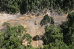 Rainforest destruction for timber production in Borneo