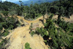 Bulldozer at a conventional logging site in Borneo -- sabah_aerial_0666