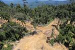 Conventional logging site in Borneo