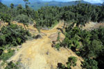 Conventional logging site in Malaysian Borneo