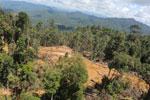 Industrial logging in Borneo -- sabah_aerial_0677