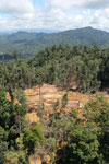 Bulldozer at a conventional logging site in Borneo -- sabah_aerial_0679