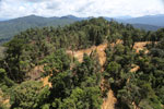 Industrial deforestation in Borneo -- sabah_aerial_0681