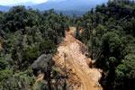 Industrial logging in Borneo -- sabah_aerial_0690