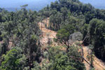 Industrial deforestation in Malaysian Borneo -- sabah_aerial_0695