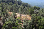 Forest degradation for timber production in Borneo -- sabah_aerial_0700
