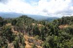 Industrial logging in Borneo -- sabah_aerial_0703