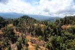 Industrial logging in Malaysian Borneo -- sabah_aerial_0704