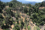 Bulldozer at a conventional logging site in Borneo -- sabah_aerial_0705