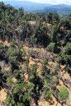 Bulldozer at a conventional logging site in Malaysian Borneo -- sabah_aerial_0706