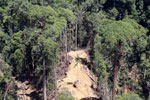 Heavy logging in Borneo