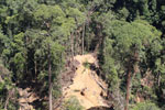 Rain forest destruction for timber production in Borneo