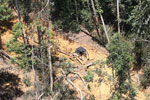 Forest degradation for timber production in Borneo