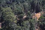 Industrial logging operation in Borneo