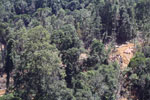Industrial timber harvesting operation in Borneo