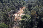 Industrial timber harvesting in Borneo -- sabah_aerial_0731