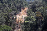 Tropical forest degradation for timber production in Borneo -- sabah_aerial_0732