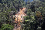 Forest destruction for timber production in Borneo -- sabah_aerial_0733