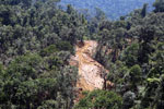 Active logging operation in Borneo