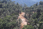 Active timber harvesting operation in Borneo