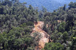 Active timber harvesting in Borneo