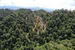 Industrial timber harvesting operation in Borneo -- sabah_aerial_0743