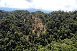 Industrial timber harvesting in Borneo