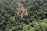 Heavy logging in Borneo -- sabah_aerial_0745