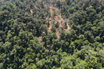 Rain forest destruction for timber production in Borneo -- sabah_aerial_0746