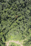 Tropical forest degradation for timber production in Borneo -- sabah_aerial_0749