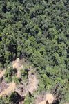 Active timber harvesting in Borneo -- sabah_aerial_0750