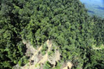 Industrial timber harvesting operation in Borneo -- sabah_aerial_0752