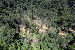 Rain forest destruction for timber production in Borneo -- sabah_aerial_0755