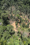 Tropical forest destruction for timber production in Borneo -- sabah_aerial_0757