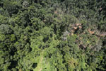 Tropical forest degradation for timber production in Borneo