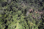 Tropical forest destruction for timber production in Borneo -- sabah_aerial_0759